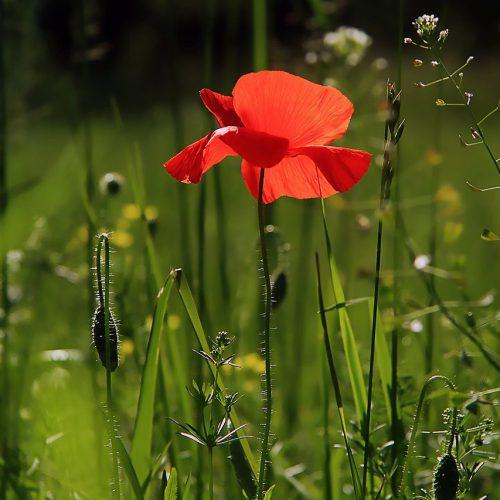 Je tuin voorbereiden op het voorjaar